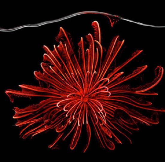 Mark Laita镜头下美轮美奂的海洋生物