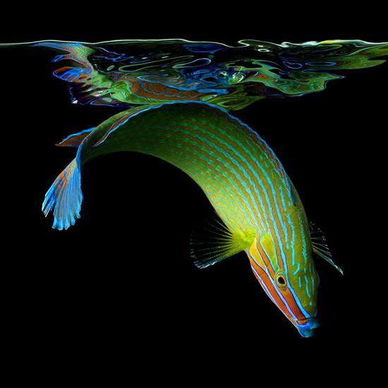 Mark Laita的《Sea》