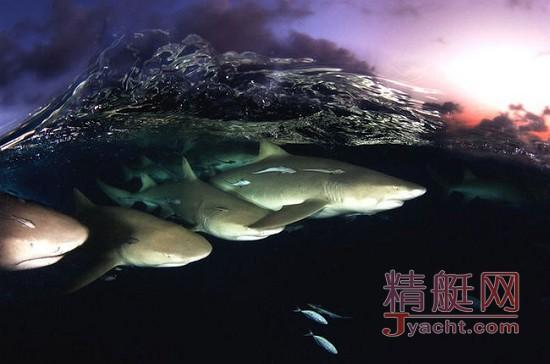 水下摄影师David Doubilet带您领略真实的海洋生命