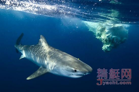 他是一名海洋栖息地的保护者