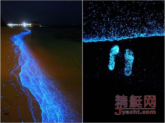 马尔代夫的荧光海滩