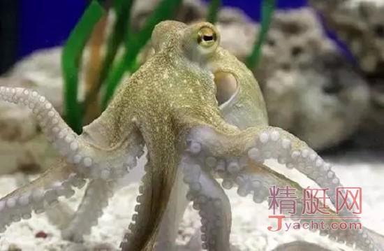 航海?别闹了!不认识这些海洋生物你还想做海贼王的男人?!