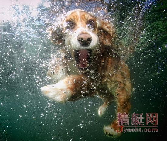 船上的宠物们,都是坠落凡间的精灵!