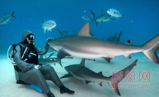 这名男子真大胆,他被鲨鱼群包围后还能淡定投食!