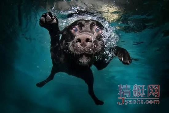 猫会晕船,狗要防晒,盘点宠物在游艇上的注意事项