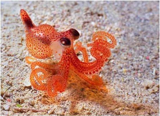 这些海洋生物小时候的样子,萌不死你!